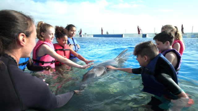 kinder und trainer im wasser, die interaktion mit delphin - 12 13 years stock-videos und b-roll-filmmaterial