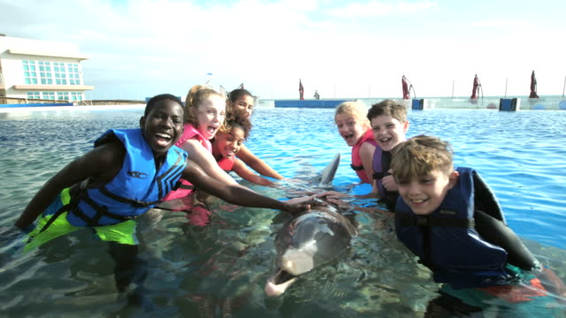 children and trainer in water interacting with dolphin - waist deep in water stock videos & royalty-free footage