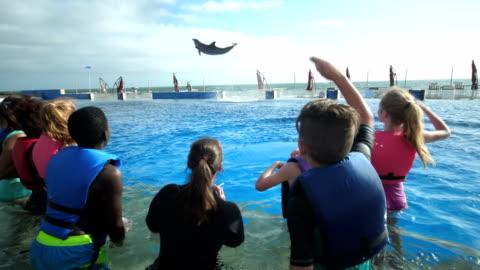 stockvideo's en b-roll-footage met kinderen en trainer in water kijken dolfijn springen hoog - dolfijn