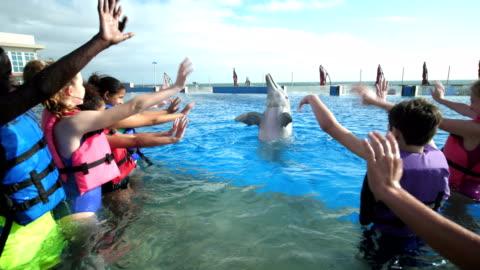 stockvideo's en b-roll-footage met kinderen en trainer in water met dolfijnen, zwaaien - dolfijn