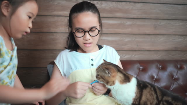vidéos et rushes de les enfants nourrissent les chats - 14 15 ans
