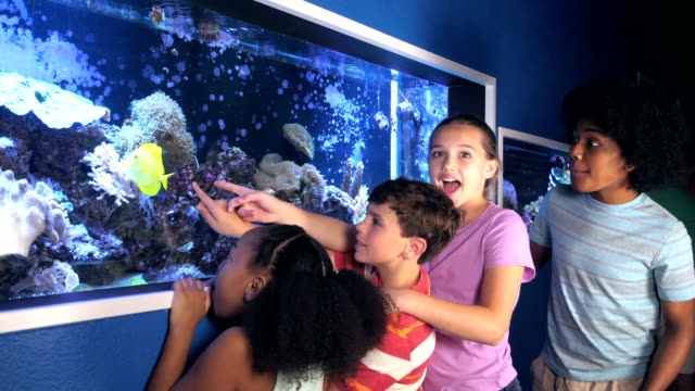 stockvideo's en b-roll-footage met kinderen in het aquarium gefascineerd door zoutwater aquarium - 12 13 jaar