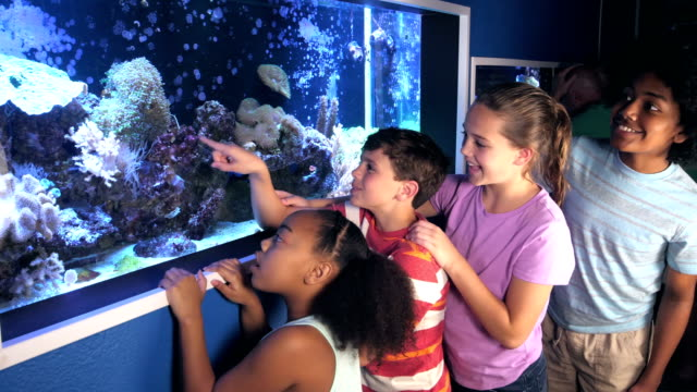 vídeos de stock e filmes b-roll de children at aquarium fascinated by saltwater fish tank - 12 13 anos