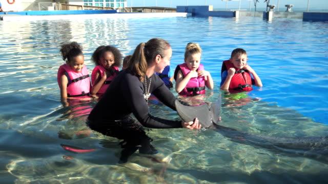 stockvideo's en b-roll-footage met kinderen op mariene leerpark met dolfijn trainer - 6 7 years