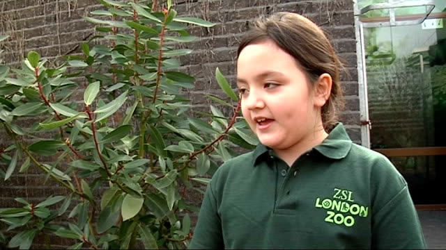 children become keeper for a day at london zoo vox pops children cutaway children sweeping out giraffe enclosure - enclosure stock videos & royalty-free footage