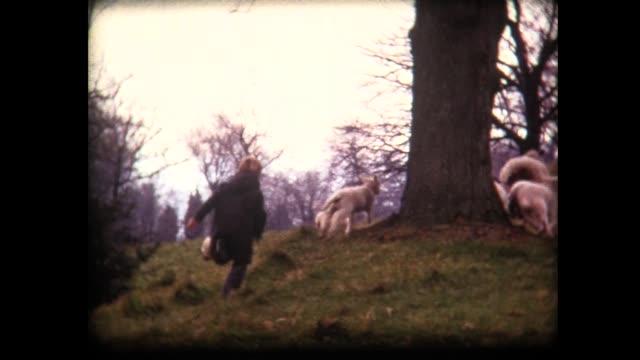 vidéos et rushes de 1973 children chase british sheep - young animal