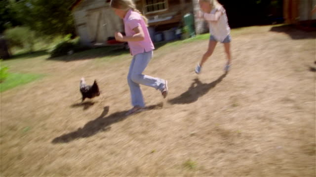 stockvideo's en b-roll-footage met children chasing chicken around on farm - kip vogelsoort