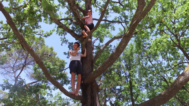 stockvideo's en b-roll-footage met children climb on tree - 14 15 jaar