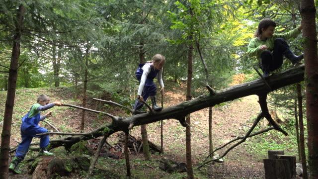 vidéos et rushes de enfants qui grimpent à un tronc d'arbre cassé dans la forêt - trois personnes