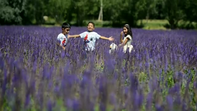 Children enjoy playing on a field covered with wild purple flowers in Edremit district of Van Turkey on August 23 2017