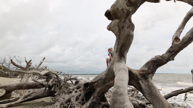 children exploring driftwood beach - nur mädchen stock-videos und b-roll-filmmaterial