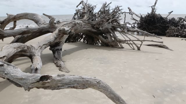 stockvideo's en b-roll-footage met children exploring driftwood beach - drijfhout
