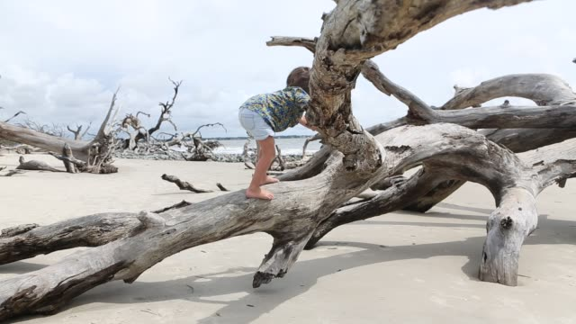 children exploring driftwood beach - solo un bambino maschio video stock e b–roll
