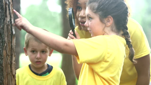 children exploring nature, summer camp or science class - summer camp helper stock videos & royalty-free footage