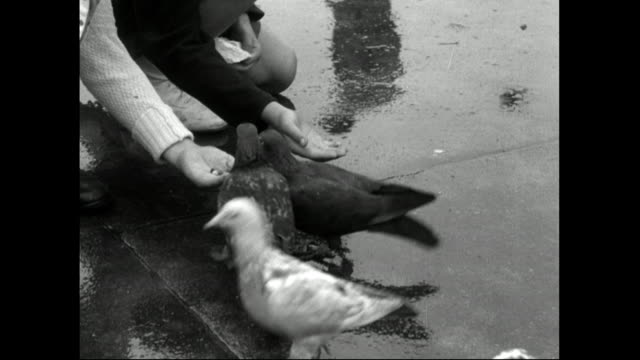 children feeding pigeons in trafalgar square in the rain;1951 - childhood stock videos & royalty-free footage