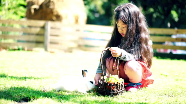children girl feed her little rabbit - rabbit animal stock videos & royalty-free footage
