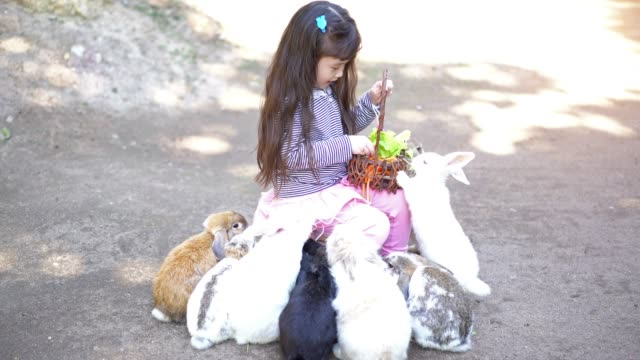 Children girl feed her little rabbit