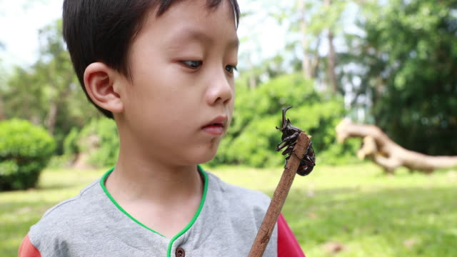 vídeos de stock e filmes b-roll de children have a beetle - encontrar