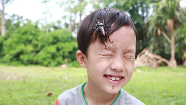 子供があるカブトムシ - 昆虫点の映像素材/bロール