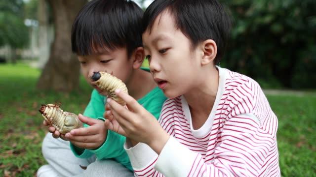 stockvideo's en b-roll-footage met kinderen hebben een kever - voelspriet
