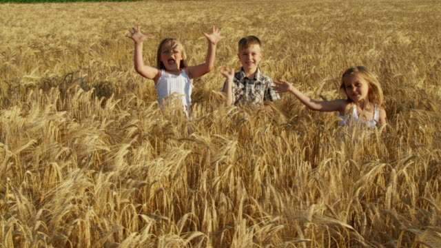 hd slow-motion: children in a wheat field - child waving stock videos & royalty-free footage