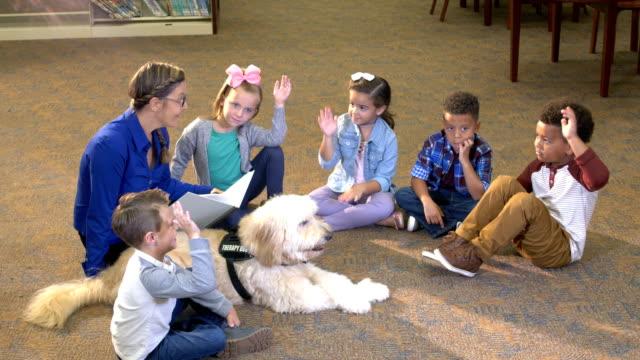 vídeos de stock, filmes e b-roll de crianças na biblioteca, lendo com cão da terapia - infância