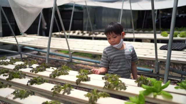 有機野菜プロットの子供たち。 - ガーデニング点の映像素材/bロール