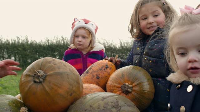 children in pumpkin field - 12 17 months stock videos & royalty-free footage