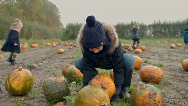 children in pumpkin field - 2 5 months stock videos & royalty-free footage
