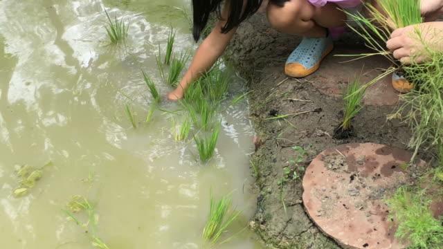 vidéos et rushes de enfants apprenant à cultiver la plante de riz dans le domaine mini paddy , l'apprentissage à la maison d'école en faisant le concept - rizière