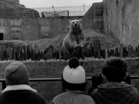 Children look at a bear and her cub in a pen at London Zoo