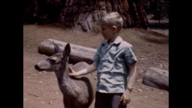 1947 children petting doe - giant sequoia stock videos and b-roll footage