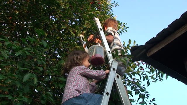 stockvideo's en b-roll-footage met children picking cherry - ladder gefabriceerd object