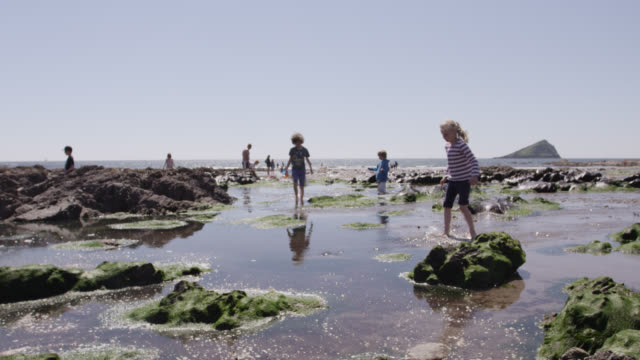 children play in rock pools on beach, devon, england - devon stock videos & royalty-free footage