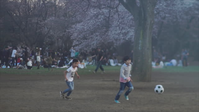 children play soccer at dusk in yoyogi park - tokyo, japan - cherry blossom stock videos & royalty-free footage