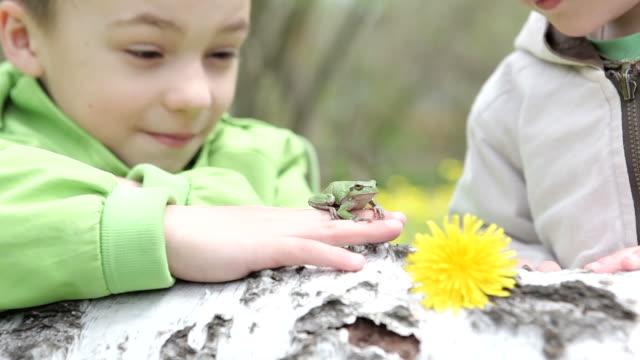 vídeos y material grabado en eventos de stock de niños jugando con un rana - rana