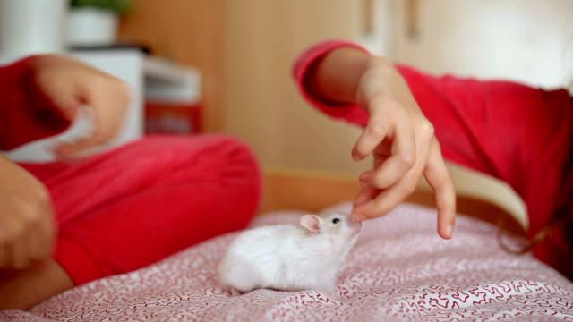 vídeos y material grabado en eventos de stock de children playing with a white hamster - hamster