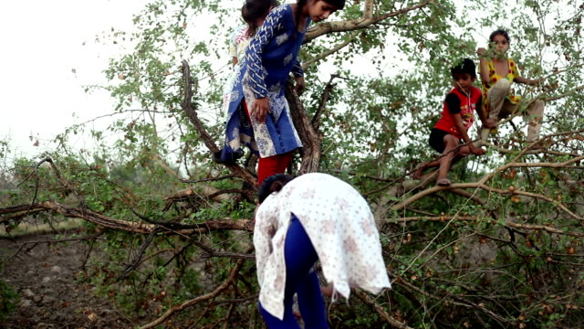 Children playing with fallen tree