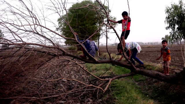 children playing with fallen tree - fallen tree stock videos and b-roll footage