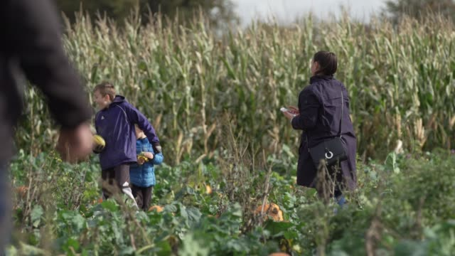 children pose for pictures at foxes farm produce - the corn maze and the pumpkin patch - basildonon october 26, 2020 in essex, england. - portrait stock videos & royalty-free footage