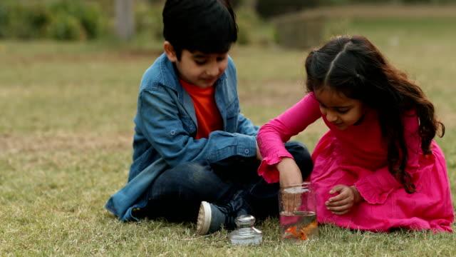 ms children removing fish from jar in garden / delhi, india - korslagda ben bildbanksvideor och videomaterial från bakom kulisserna