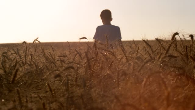 vídeos de stock, filmes e b-roll de crianças que funcionam no trigo - trigo