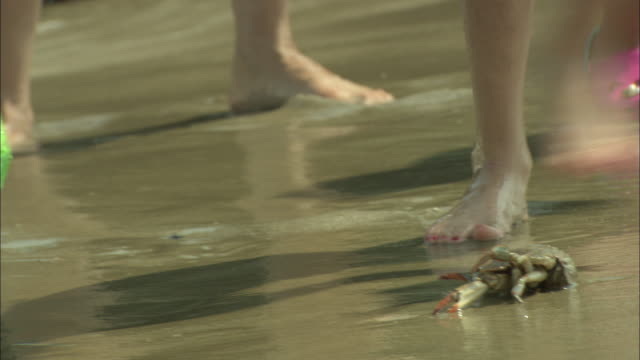 Children scoop a dead crab with a toy shovel along a New Jersey shore.