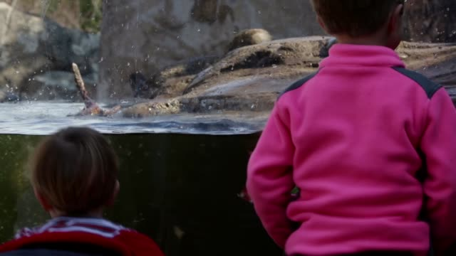 children watch as asian small-clawed otters play in their enclosure at the national zoo. washington, dc. february 20, 2014. - enclosure stock videos & royalty-free footage
