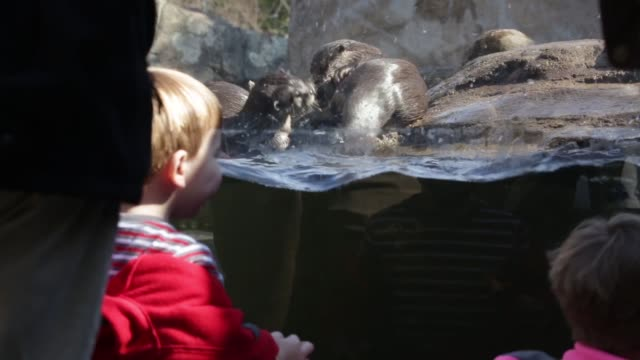 LS Children watch as Asian smallclawed otters play in their enclosure at the National Zoo Washington DC February 20 2014