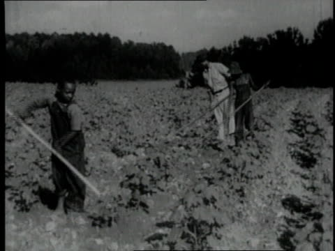 1940 montage children working a farm filed / united states - sharecropper stock videos & royalty-free footage