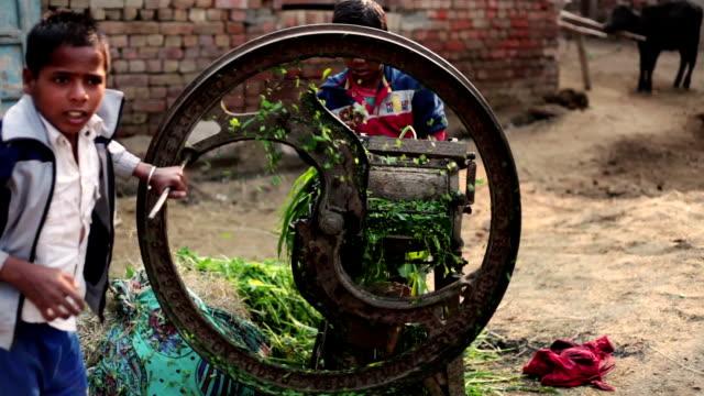 vídeos y material grabado en eventos de stock de los niños cortar los alimentos para animales en casa - hambriento
