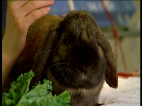child's hand strokes cute lop-eared brown rabbit - pets stock videos and b-roll footage