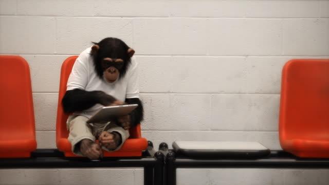 Chimp Casual Browsing