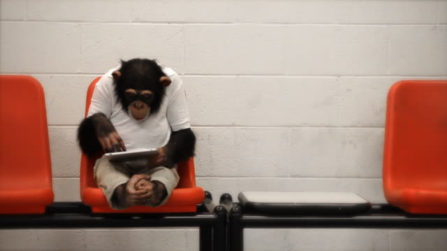 chimp casual tablet - primate stock videos & royalty-free footage